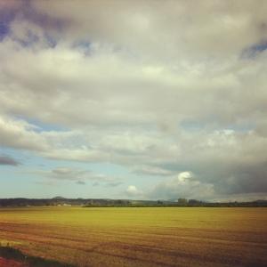 mt vernon landscape