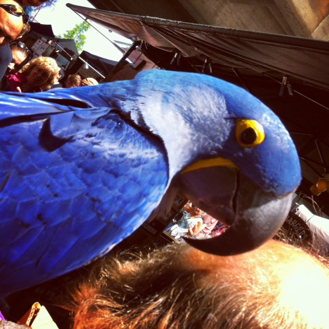 Parrot yes it s real spied in the portland saturday market