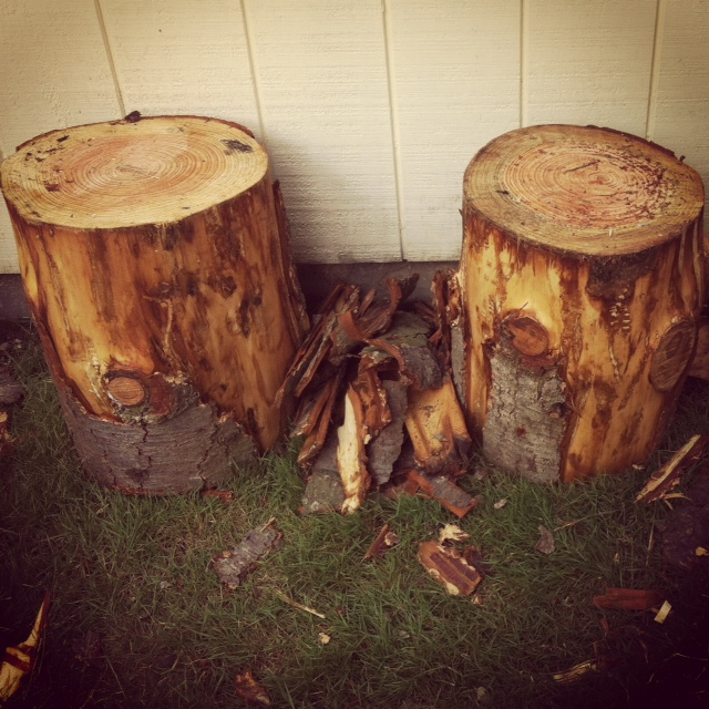 Magnificent Tree Stump Stool Beautiful Musings Download Free Architecture Designs Terstmadebymaigaardcom