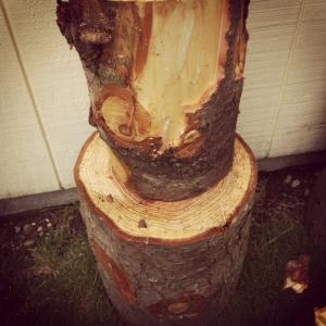 tree stump tool 1
