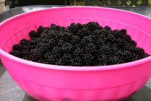black berries 1