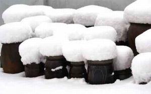 snow-stools_i8wis_7860