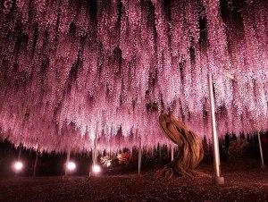 amazing-trees-1-1