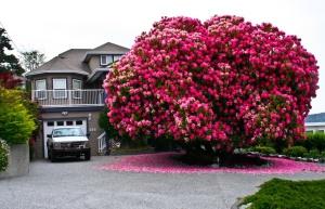 amazing-trees-7
