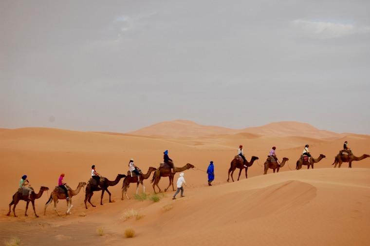 morocco 4 camels.jpg